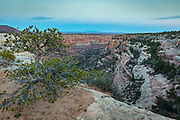 Arch Canyon on the Cedar Mesa of Utah