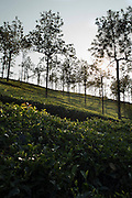 Images shot for Teabox.in - landscape, factories and life around tea estates in and around Conoor, Tamilnadu, Southern India.