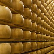 maturing Parmigiano Reggiano