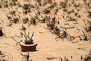 An unexploded landmine in the Manageesh Oil Fields in Kuwaitnear the Saudi border. Huge amounts of munitions were abandoned in Kuwait by retreating Iraqi troops in February 1991. Also, nearly a million land mines were deployed on the beaches and along the Saudi and Iraqi border. In addition, tens of thousands of unexploded bomblets (from cluster bombs dropped by Allied aircraft) littered the desert.