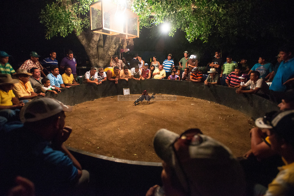 """The longer cockfighting they take  bets go up too.  The inhabitants of the surrounding area meet during village fairs """"Negros Kimbanganos"""" that recalls the story of the slaves who worked in tobacco plantations. Lezama, 09/07/13. (Gregorio Marrero / Orinoquiaphoto)"""