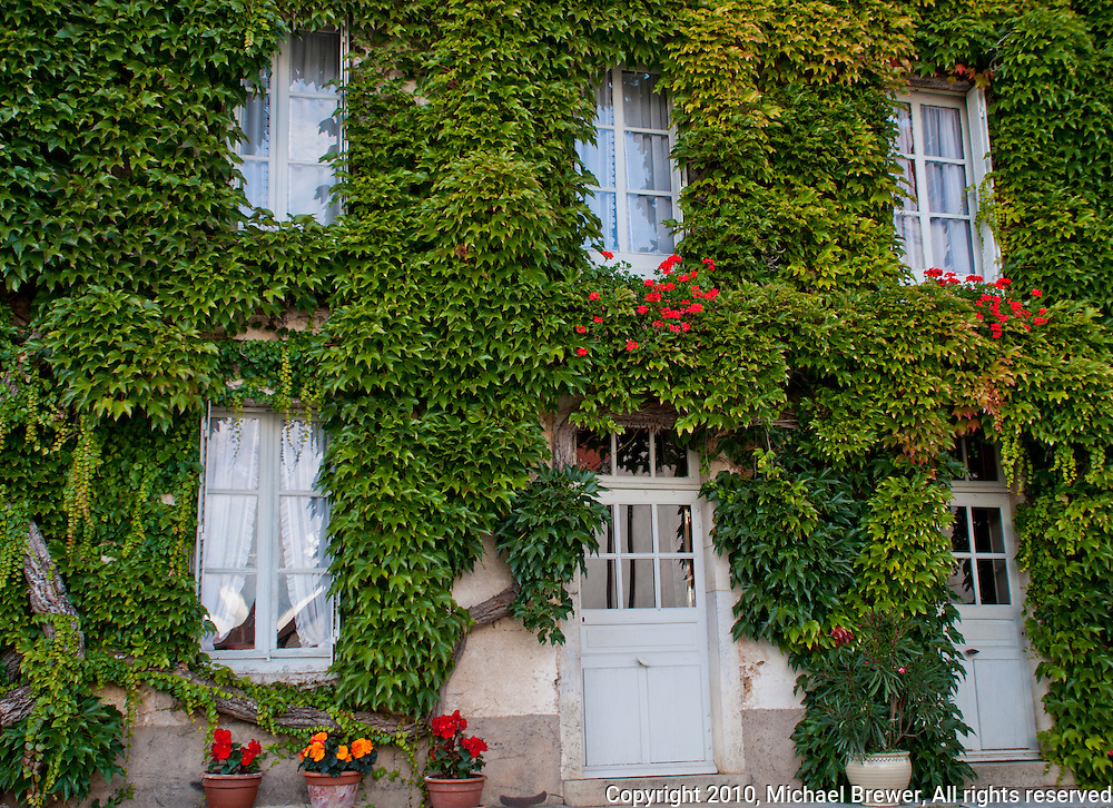 House in France with vine covering the walls and almost blocking the windows.