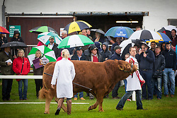 © Licensed to London News Pictures. 11/07/2017. Harrogate UK. Spectators stand in the rain watching the cattle show at the Great Yorkshire Show in Harrogate this morning. The great Yorkshire show is Englands Premier Agricultural event & is expected to attract over 130,000 visitors over the three day period. Photo credit: Andrew McCaren/LNP
