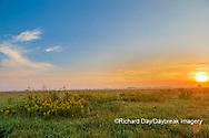 63893-03802 Sunrise and prairie Prairie Ridge State Natural Area Marion Co. IL