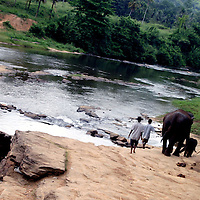 PINNAWELA, OCTOBER-3 : mahouts walk orphan mother mathali and her 8 day old baby to the babies' first bath in the ma Oya river under chief mahout Sumanabanda's surveillance ( blue sarong)   in Pinnawala, October 3, 2005, Sri Lanka.  The baby is considered a second generation elephant as it descends from an orphan mother . Sumanabanda says the baby will be accustomed slowly to the herd .PINNAWELA, OCTOBER-3 : an elephant greets a visitor   in Pinnawela, October 3, 2005, Sri Lanka.   .The Pinnawela orphanage was started in 1975 and initially designed to afford care and protection to the many baby elephants found in the jungle without their mothers. In most cases the mother either had died or been killed. .Animals are allowed to roam freely duringthe day and a herd structure allows to form. there are only a few elephant orphanges worldwide. At Pinnawela an attempt was made to simulate, in a limited way, the conditions in the wild. Currently the herd consists of 75 elephants under the surveillance of legendary  Mahout chief Sumanabanda.
