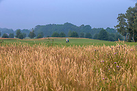 ENSCHEDE - Oost 3. Golfbaan Rijk van Sybrook - COPYRIGHT KOEN SUYK
