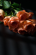 Still Life Roses photo print, orange flowers, bouquet, Santa Monica wall art photography limited edition matted print, fine art.