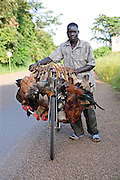 A local farmer uses a bike to carry his poultry livestock in Uganda.