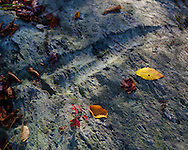 Bedrock, Glacial groove, fall, leaves