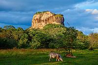 Sri Lanka, province du centre-nord, district de Polonnaruwa, Sigiriya, Ville ancienne et forteresse de Sigiriya classée patrimoine mondial de l'UNESCO, rocher du lion // Sri Lanka, Ceylon, North Central Province, Sigiriya Lion Rock fortress, UNESCO world heritage site