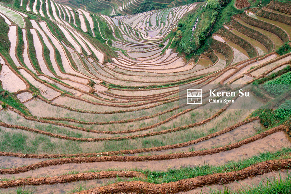 Water filled terraced rice paddies in the mountain, Longsheng, Guangxi Province, China