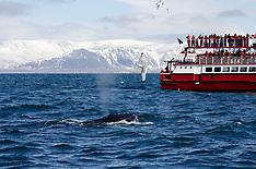 Iceland Porfolio
