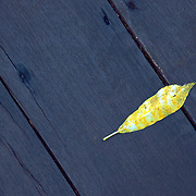 A fallen leaf on wooden decking