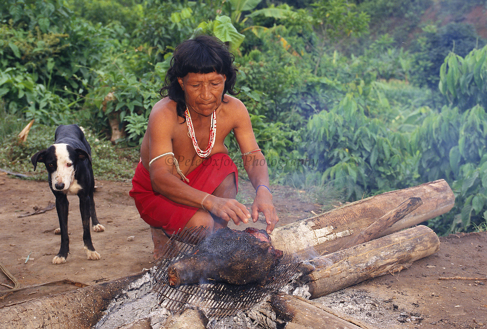 Yaminahua Indian Cooking Peccary Head<br />
