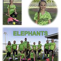 2017 Softball Teams -Elephants and Savages