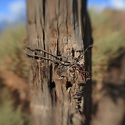 Distressed Wood Fencepost - North Owens Valley - Lensbaby