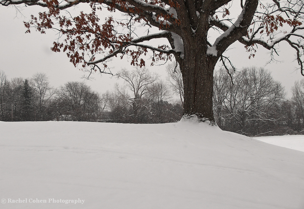 &quot;Once Upon a Hill&quot;<br />