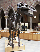 Struthiomimus sedens, Dinosour