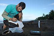 A Costa Rican researcher is monitoring the temperature in the developing sea turtle nests at Ostional beach. Sea turtles have, like many other reptiles, temperature-dependent sex determination during egg development. At a pivotal temperature of about 30 °C the sex ratio of the hatchlings will be balanced, at higher temperatures more females and in colder nests more males are produced. Temperatures below 25 °C and above 35°C are considered lethal..A anthropogenic increase in water and atmospheric temperature would affect sea turtles e.g. by altering conditions at nesting and foraging habitats. | Ein Mitarbeiter der Meeresschildkröten-Wissenschaftler einen Temperatursensor in einem Nest der Oliv-Bastardschildkröte (Lepidochelys olivacea) installiert. Die in regelmäßigen Abständen abgelesenen Daten geben Aufschluss über das vermutliche Geschlechterverhältnis bei den Jungtieren aus diesem Gelege. Bei Meeresschildkröten wird, wie bei vielen anderen Reptilienarten auch, das Geschlecht nicht genetisch festgelegt, sondern entwickelt sich je nach Bruttemperatur. Man weiss aus Vorstudien, dass im Falle der Oliv-Bastardschildkröte sich bei einer Temperatur von etwa 30°C gleich viele männliche wie weibliche Jungtiere entwickeln. Bei höheren Temperaturen verschiebt sich das Verhältnis zugunsten der Weibchen, bei niedrigeren werden mehr Männchen entstehen. Wird das Geschlechterverhältnis in der Nachkommenschaft durch äußere Einflüsse stark verschoben, hat dies fatale Auswirkungen auf die Population dieser Tierart.