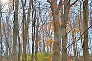 Ohio late fall