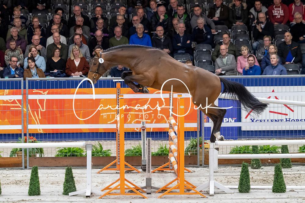005, Amigo Van Spalbeek<br /> KWPN hengstenkeuring - 's Hertogenbosch 2020<br /> © Hippo Foto - Dirk Caremans<br />  29/01/2020