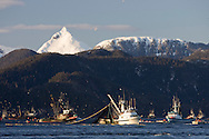 Commercial fishing seiners work to haul in nets during the 2007 Sitka Herring Sac Roe fishery.