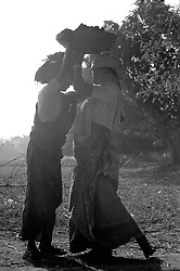 BANGLADESH DINAJPUR OCT94 - Labourers at work in the food for work programme following the drought and failed harvest in rural Dinajpur, northern Bangladesh...jre/Photo by Jiri Rezac..© Jiri Rezac 1994