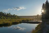 Beaver dam at Schwabacher Landing, Grand Teton National Park Wyoming