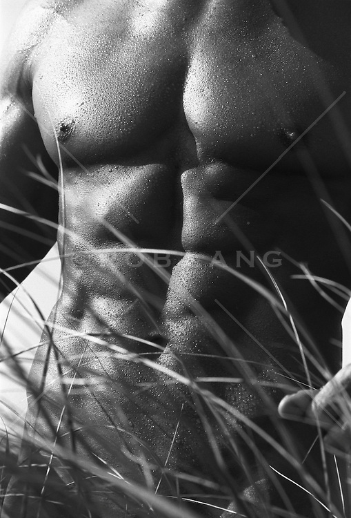 torso of a muscular man in tall grass
