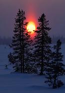 Winter landscape and Spruce (Picea abies) Lapland, Sweden