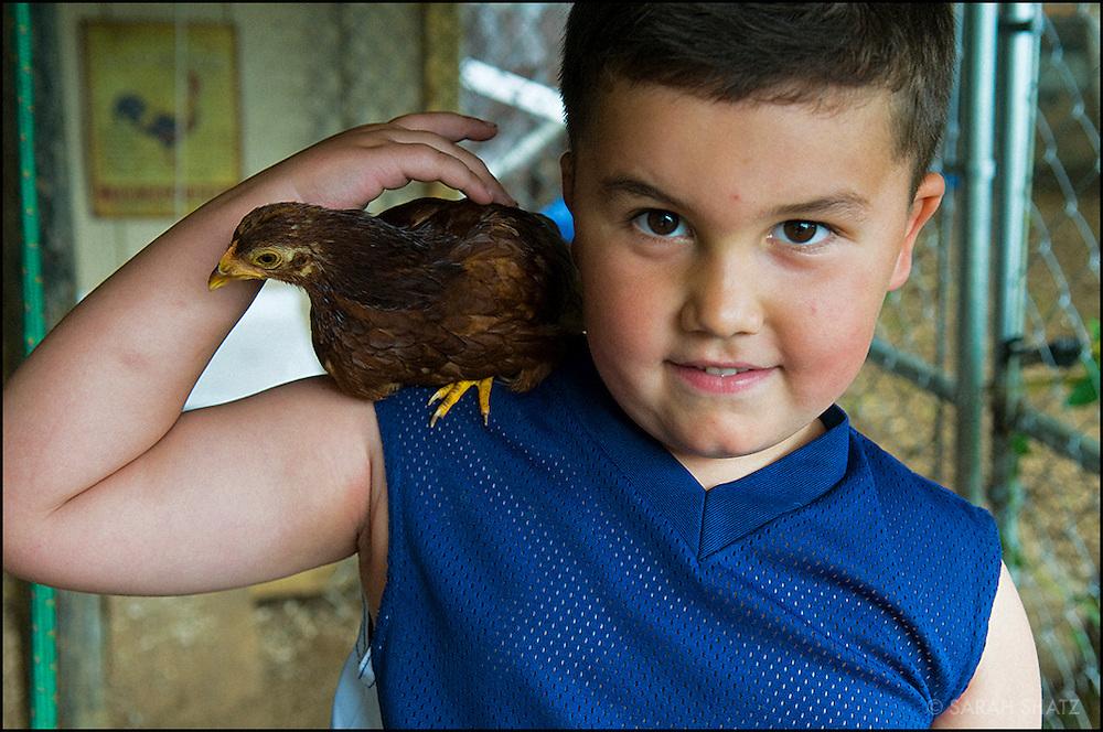 Boy with bird in a chicken coop