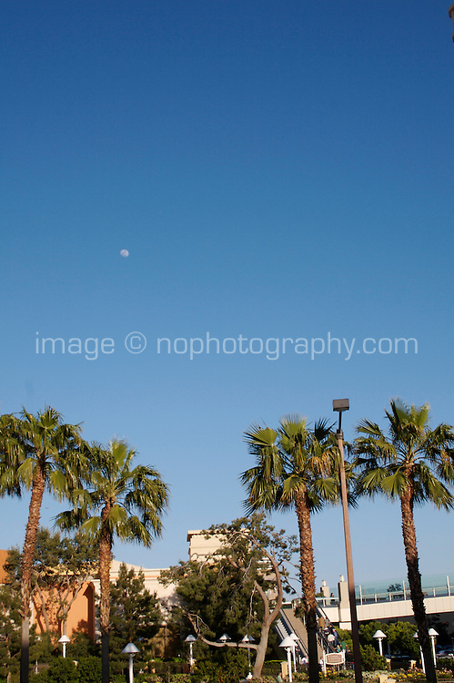 Moon rising over palm trees on Las Vegas Boulevard, Las Vegas, Nevada. Also known as The Las Vegas Strip where many of the famous themed casinos and hotels are located.