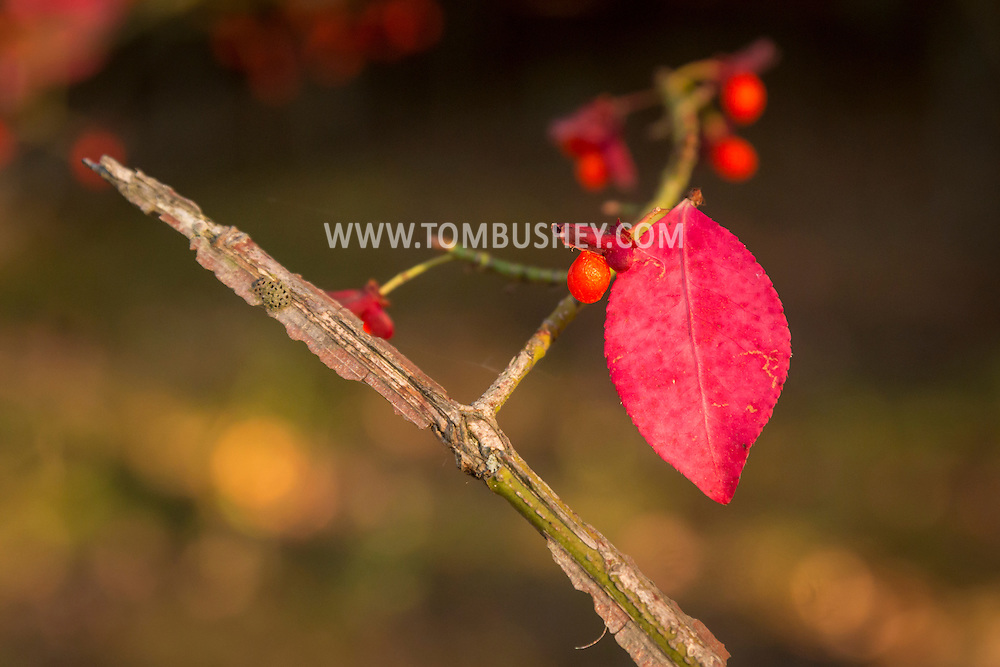 Middletown, New York - Autumn scenes at Fancher-Davidge Park on Oct. 14, 2016.