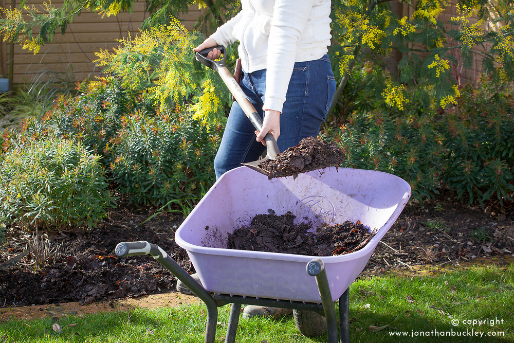Mulching bare soil in a border