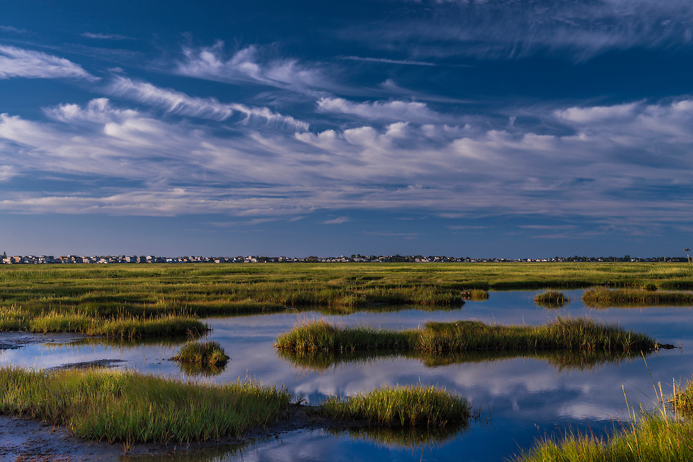 Rachel Carson National Wildlife Refuge, marsh and grasses in summer, Wells, ME