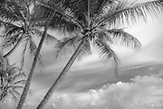 Beach with coconut palms and partly silky sky