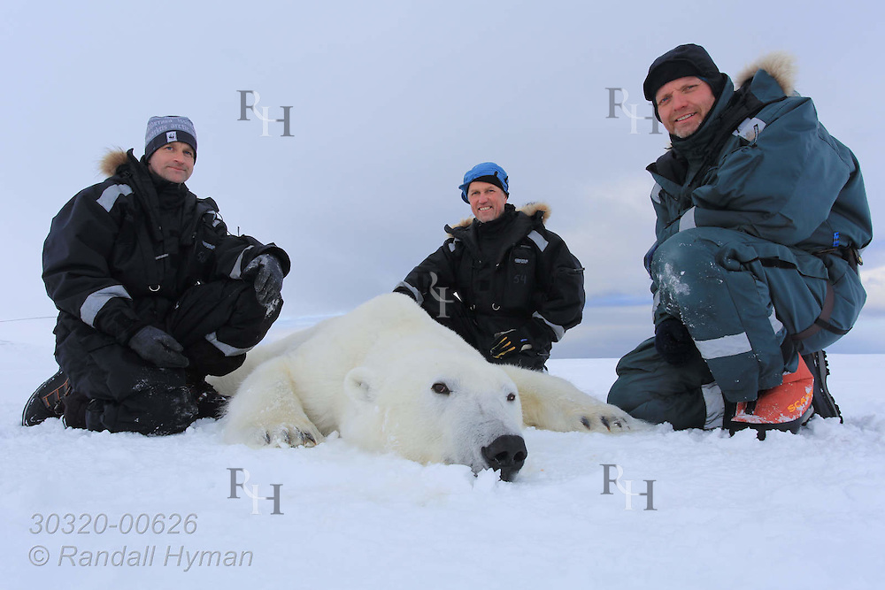 Scientists Jon Aars, Morten Tryland, and Magnus Andersen pose beside sedated six-year-old male polar bear in Wahlenbergfjorden at Nordaustlandet, Svalbard, Norway.