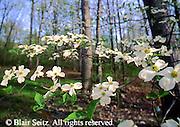 PA landscapes Spring, Pennsylvania