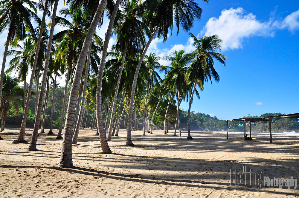 Quiet beach with palm trees in San Pancho, Mexico