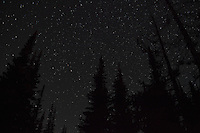 A starry sky with silhouetted trees in the North Cascades, Washington, USA.