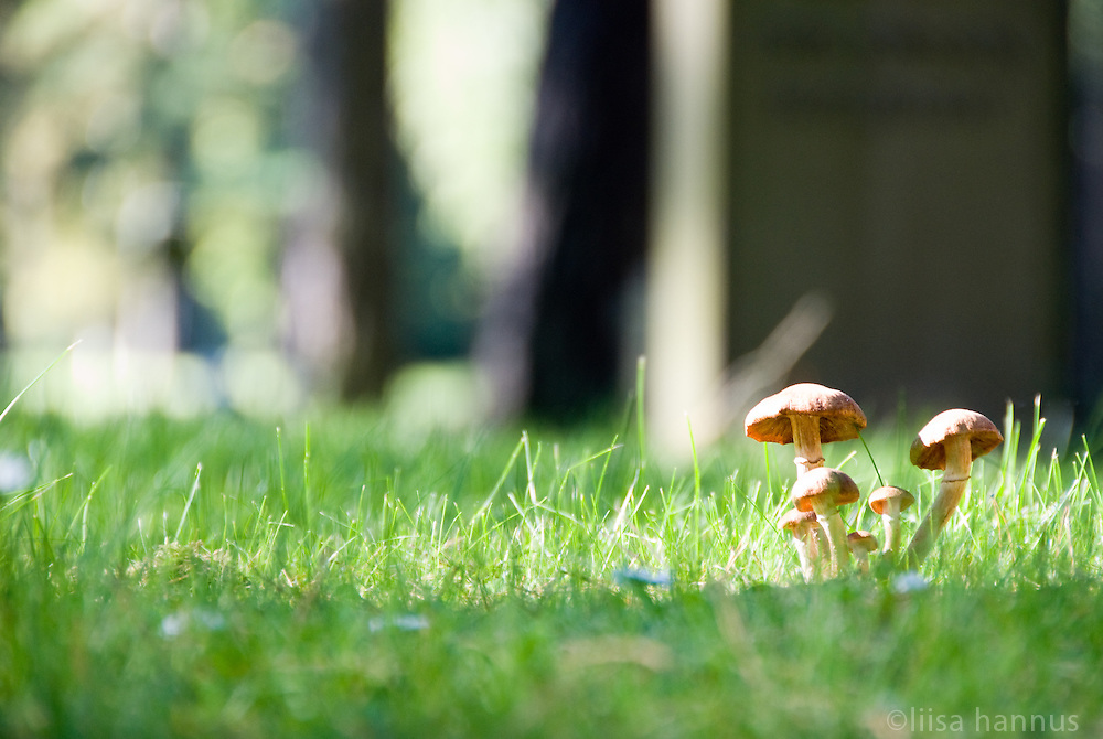 An example of the architects' original intent that Skogskyrkogården, or The Woodland Cememtery, should be in tune with nature, mushrooms are left to grow in grass outside of the Visitor's Centre.