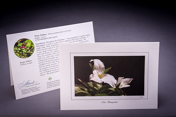 Did you know if you pick the flower of the Trillium it will not come back again the following spring?  The Trillium has been used medicinally for many generations, learn more about this native wildflower and why it is also called birth root.  <br /> <br /> Artemis Photo Greeting Cards featuring NH native flora and fauna and historic sites. The cards are made exclusively in NH made from 100% FSC recycled paper, manufactured with wind and water power, and are archival acid free paper. Each card includes details on the back about the image, including interesting anecdotes, historic facts, conservation status, and recipes.