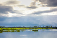 The light shines through stormy clouds over a coastal salt marsh.