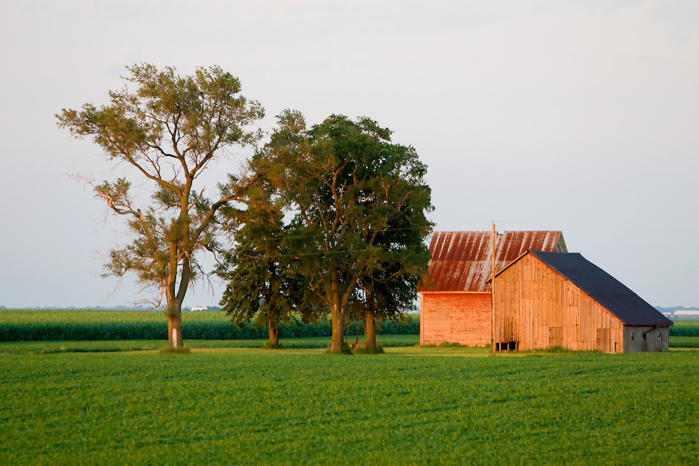 Late afternoon sunshine catches the wooden sides of an old barn in the green fields of central Illinois.