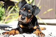 dog, Meep, dog portrait, dog photography, dog photographer, pet photography, pet photographer, Boston dog photography, Boston dog photographer