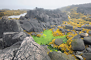 Fog and basalt rocks along the Bay of Fundy <br /> Brier Island<br /> Nova Scotia<br /> Canada