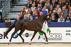 301, NN<br /> KWPN Stallionshow - 's Hertogenbosch 2018<br /> © Hippo Foto - Dirk Caremans<br /> 02/02/2018