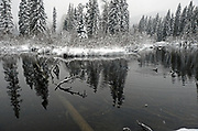 Pond and duck along the Yaak River during a heavy snowstorm in early winter. Yaak Valley in the Purcell Mountains, northwest Montana.