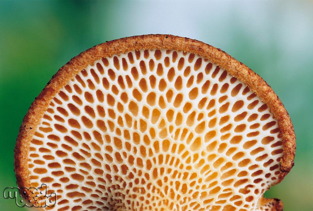 Weblike Underside of Fungus