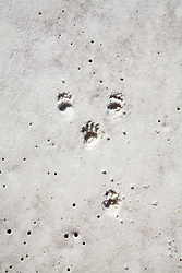 Tiny animal tracks on the pristine white sand of Silica Beach.